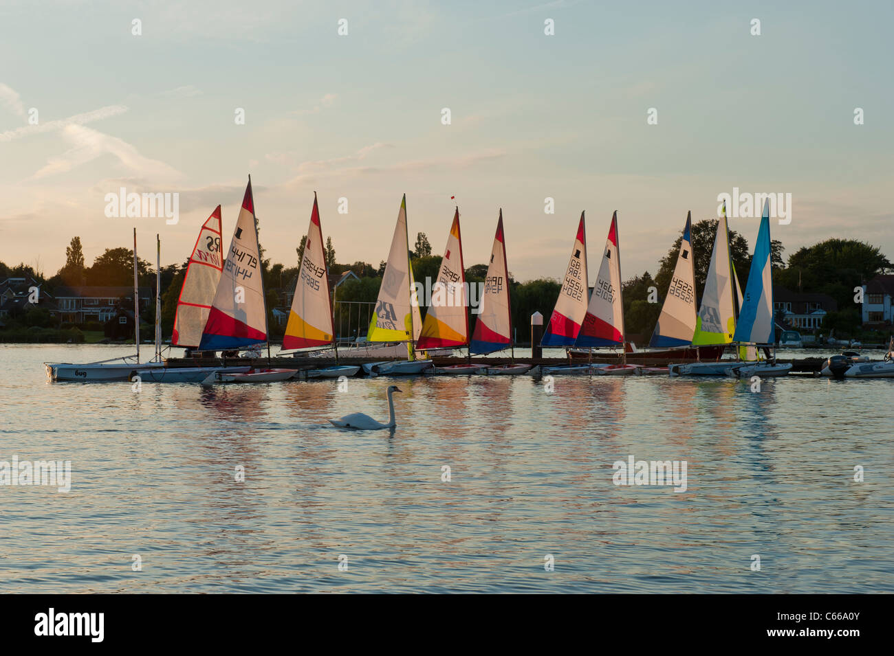Sailing bugs and white swan on Oulton Broad UK boats Stock Photo