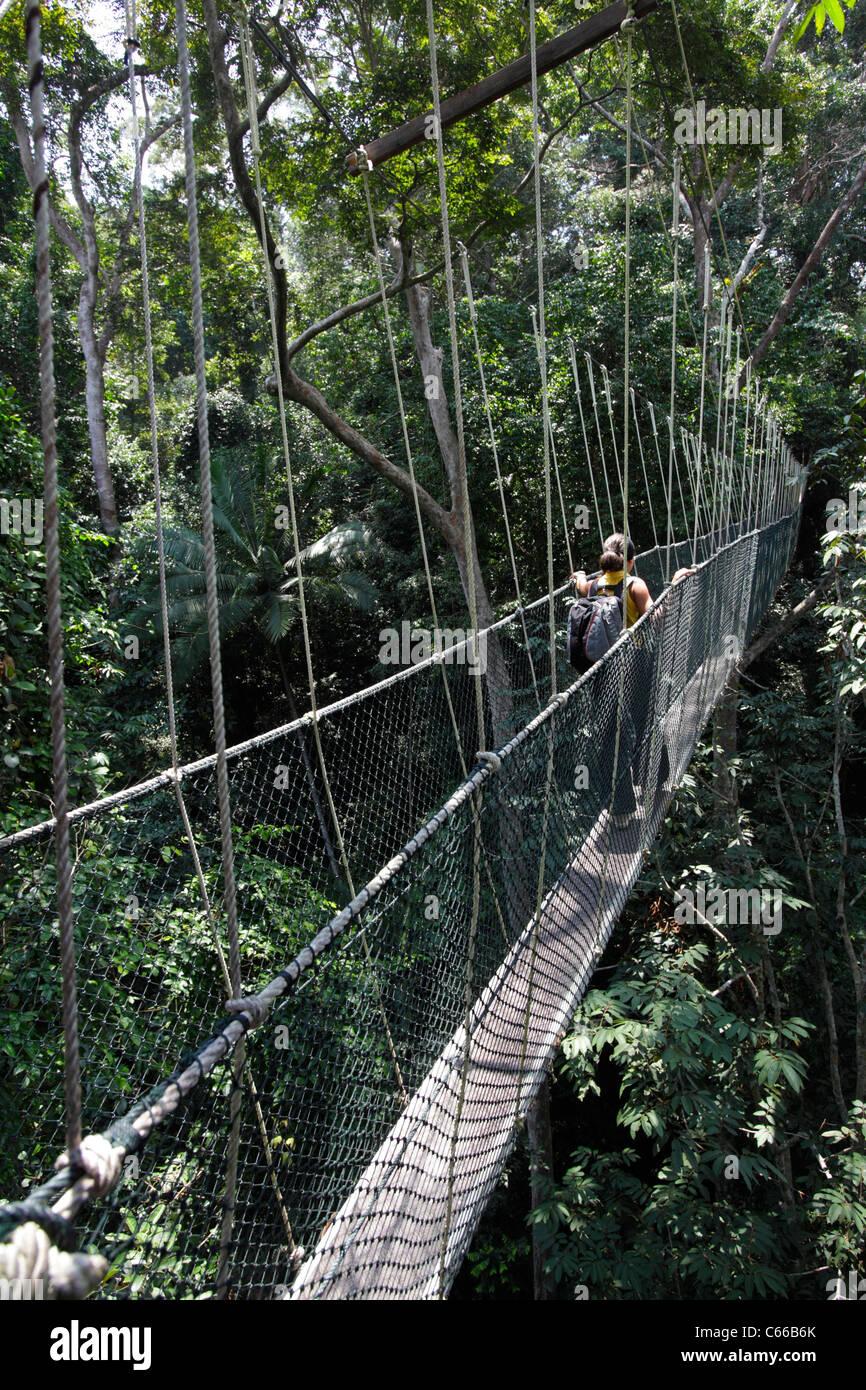 Canopy walk in the Taman Negara's rainforest, Malaysia Stock Photo