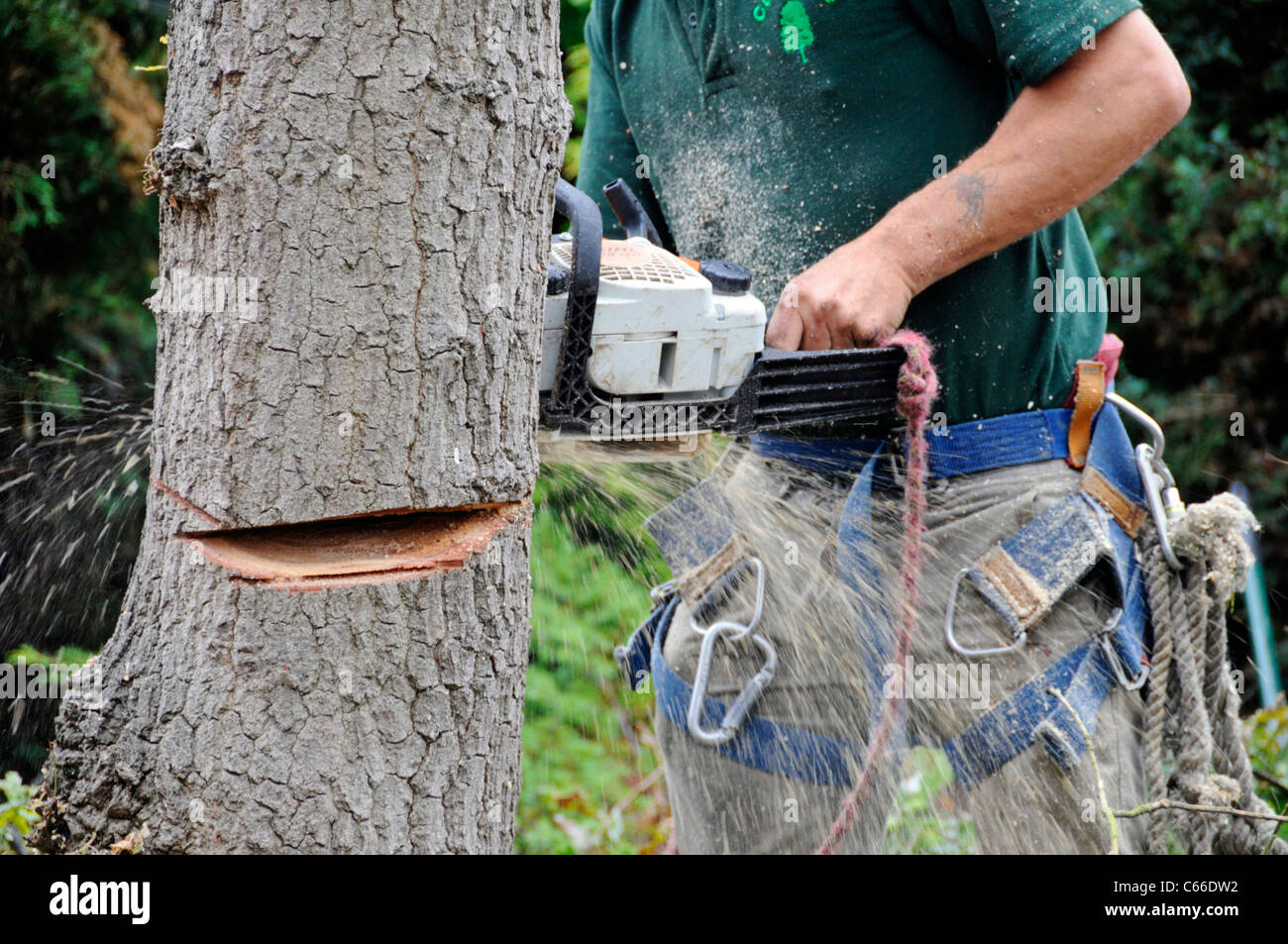 Close up professional male Arborist holding a hand held petrol driven chain saw machine to cut through an oak tree Stock Photo