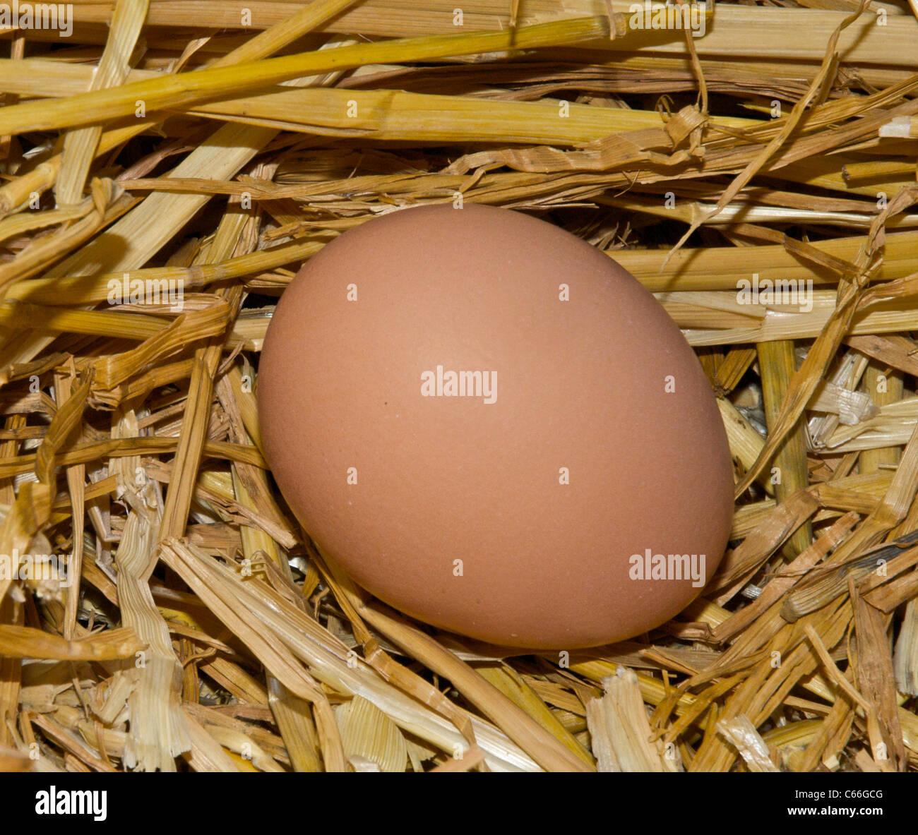 Newly laid hen's egg, fresh chicken's egg - Stock Image