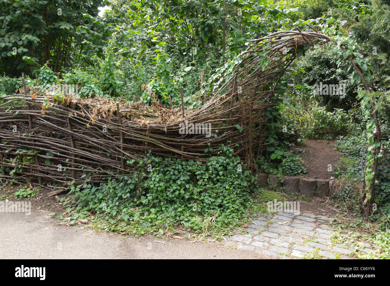 Willow Hedge Natural Garden Fence Stock Photos Willow Hedge