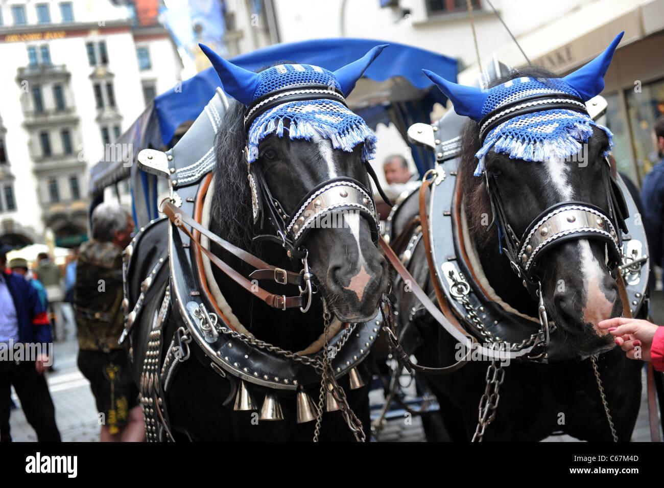Bavarian draft horses Munich Bavaria Germany Munchen Deutschland - Stock Image