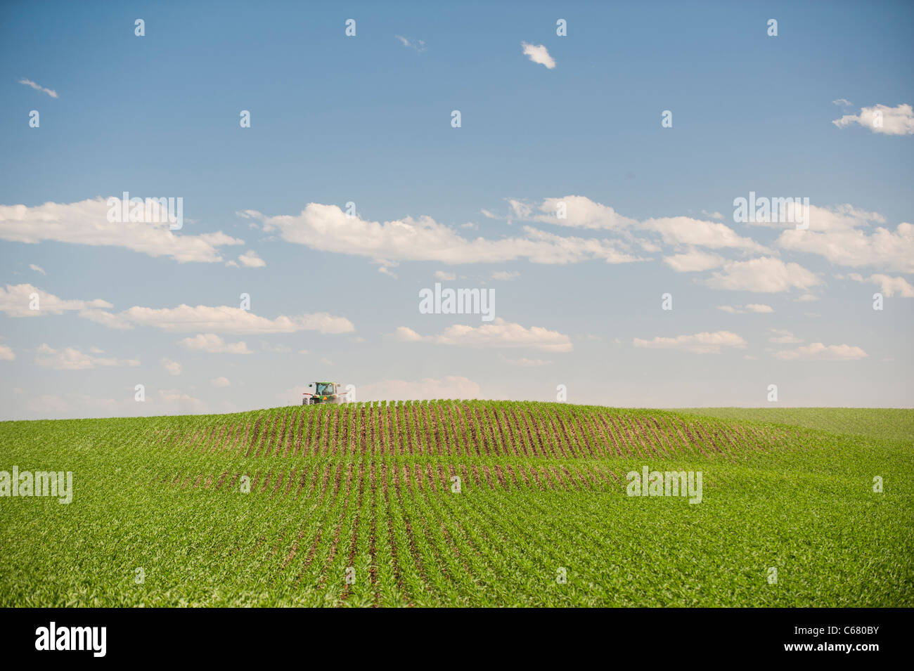 A farmer drives a tractor through his corn field in Idaho in Summer Stock Photo