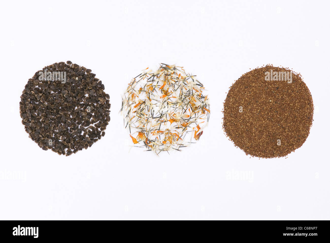 Aconitum, Tagetes and Digitalis seeds on a white background - Stock Image