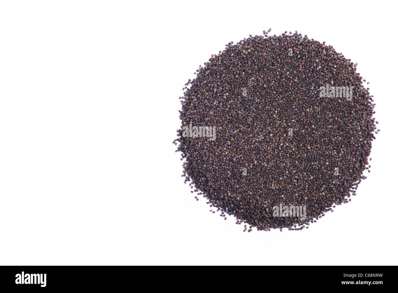 Papaver somniferum. Poppy seeds on a white background. - Stock Image