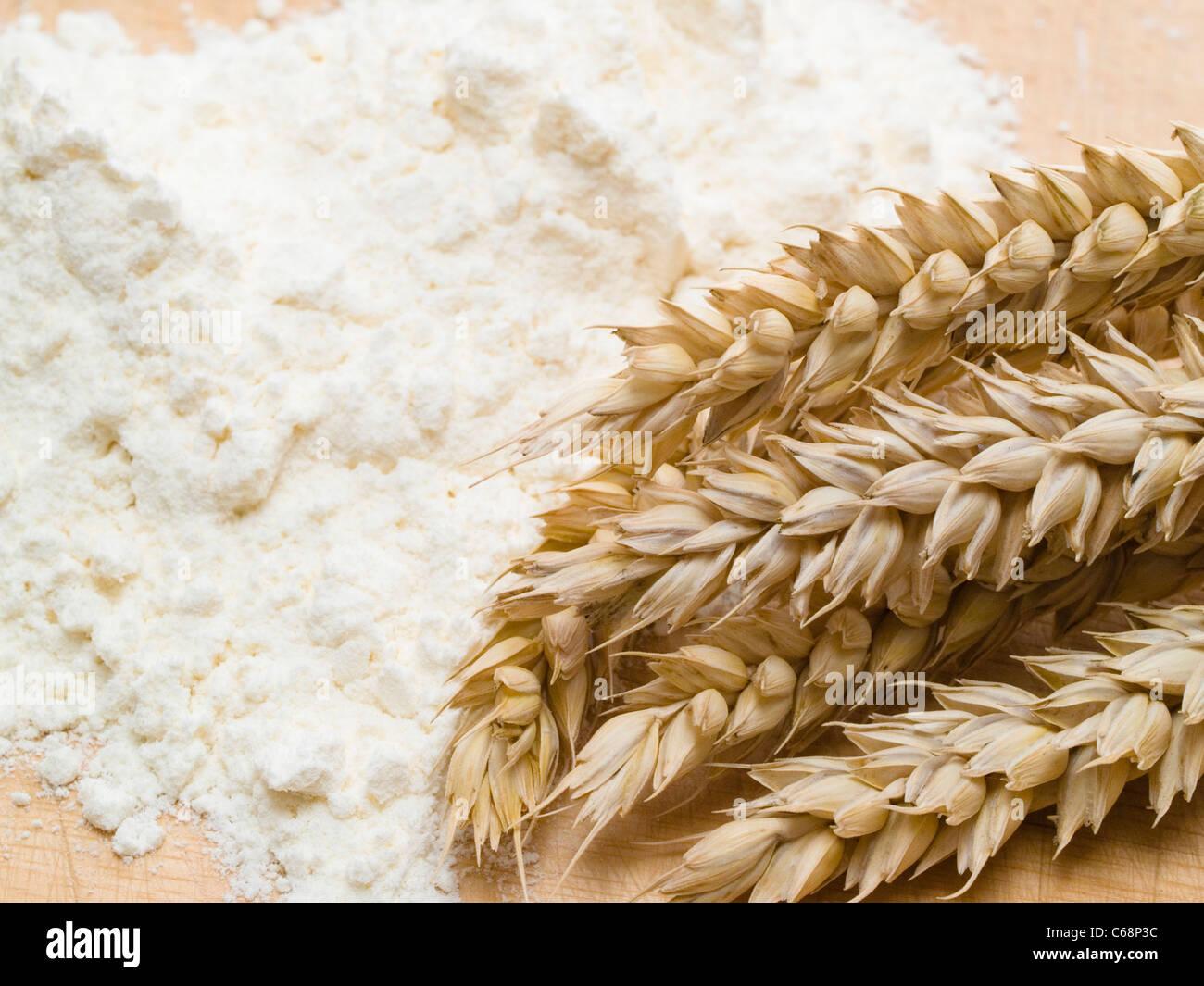 eine Weizenähre liegt im Weizenmehl | a wheat ear in wheaten flour - Stock Image