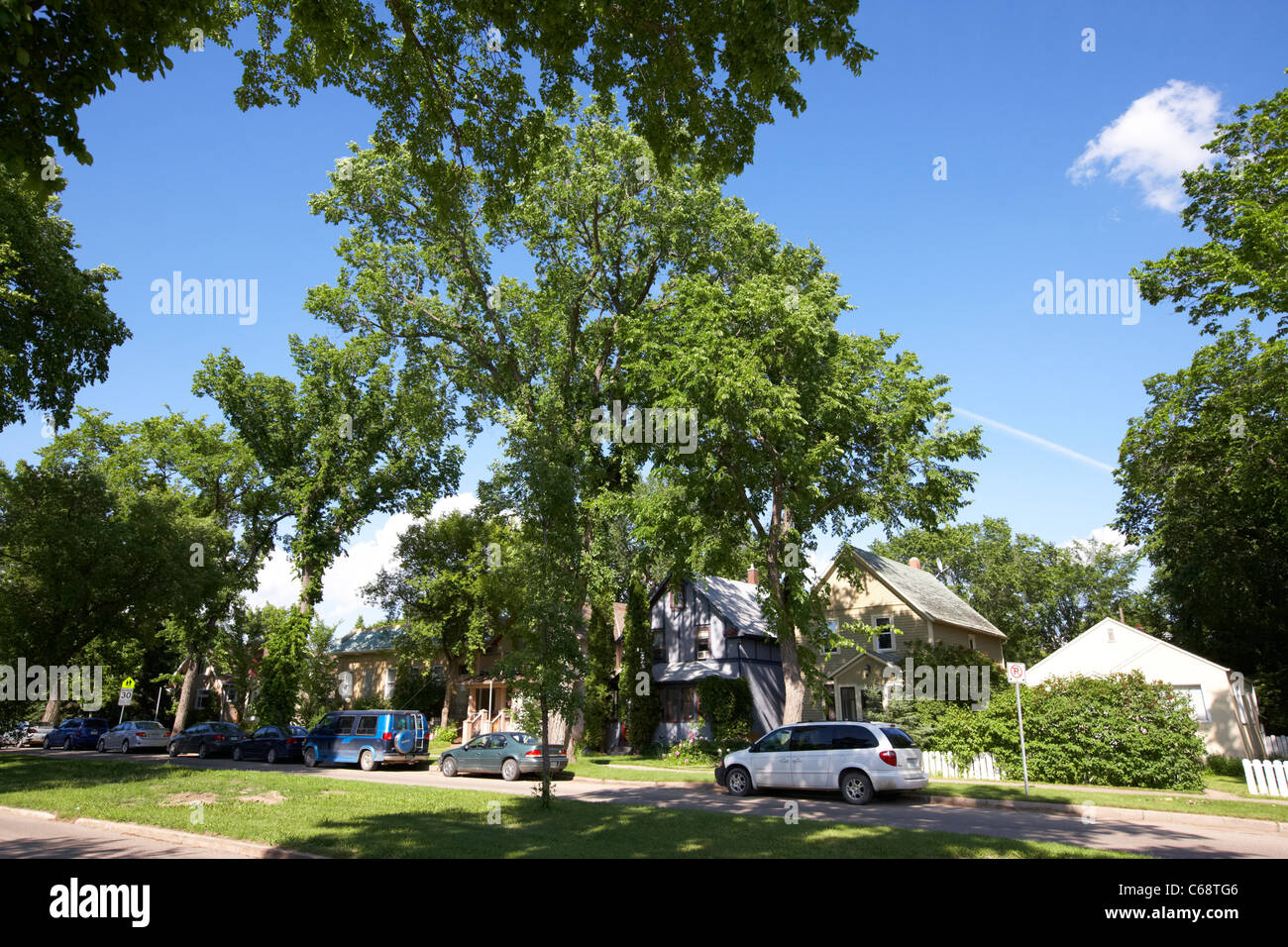 residential neighbourhood on tree lined avenue in city of Saskatoon Saskatchewan Canada - Stock Image