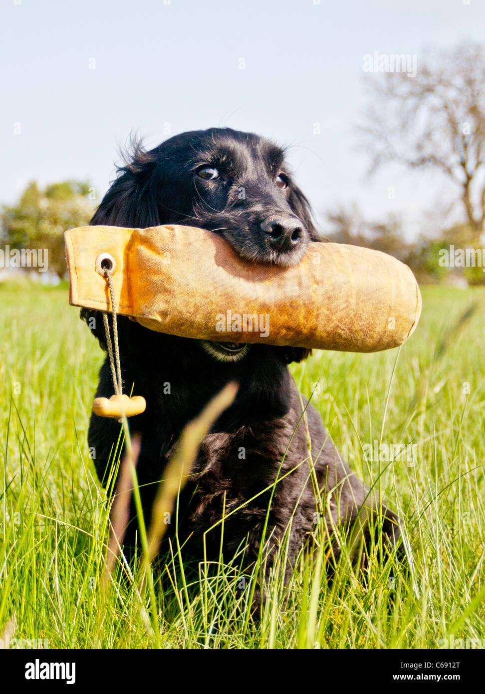 Dog Training Dummy