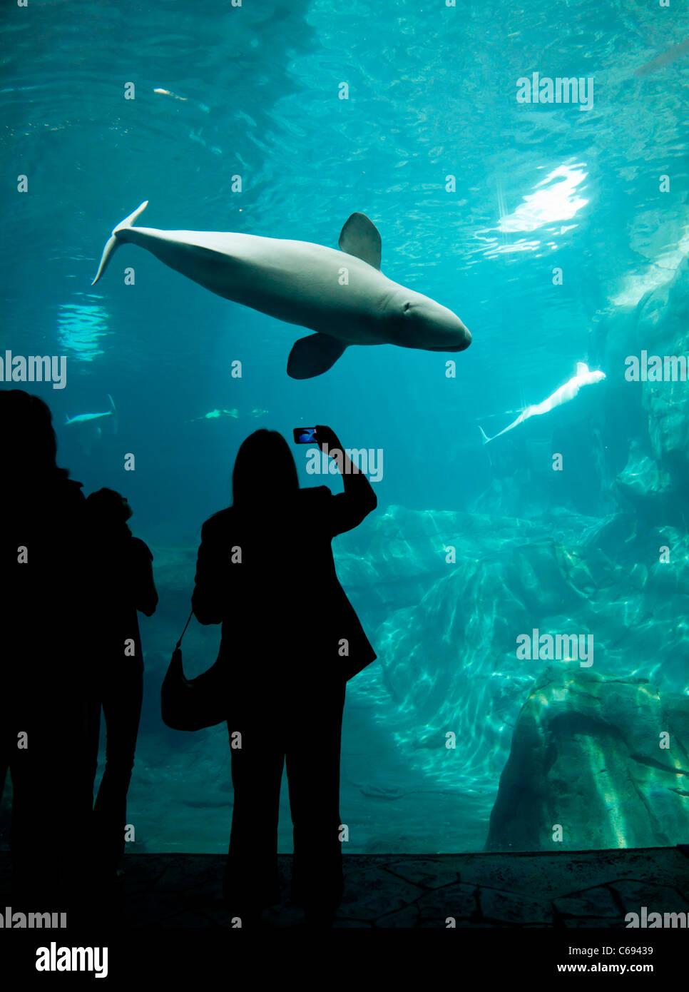 Visitors at an aquarium - Stock Image