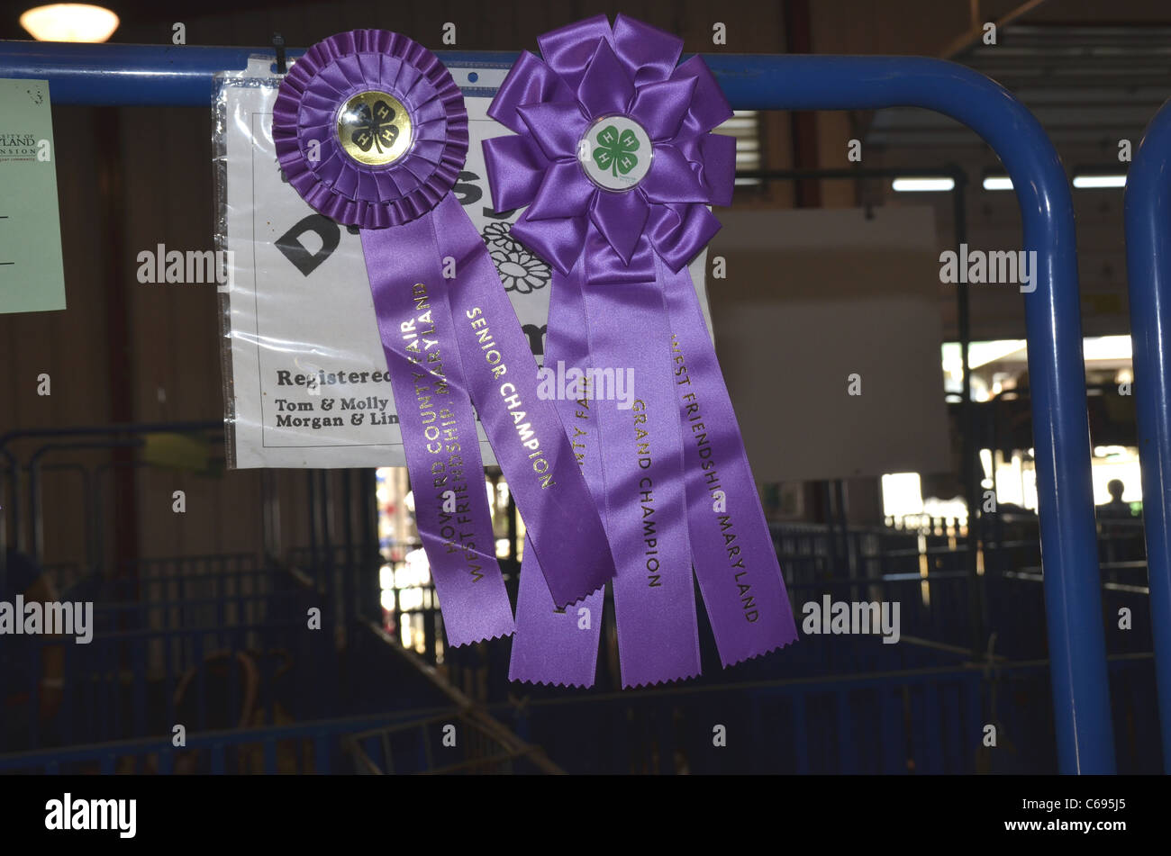 Ribbons won in a County Fair hang from a pole Stock Photo