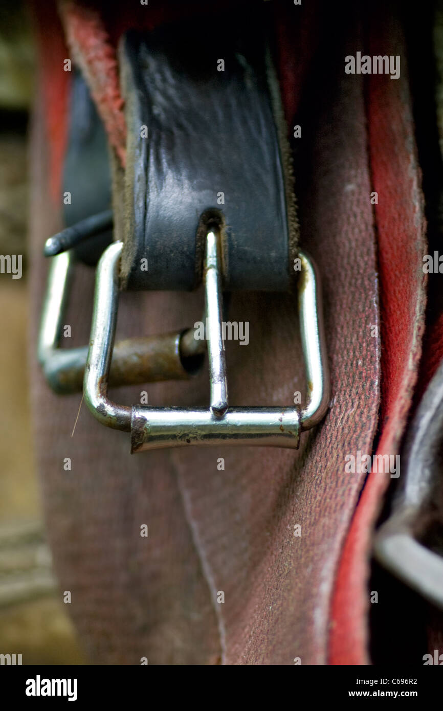 fastener of saddle. Part of horse Harness - Stock Image