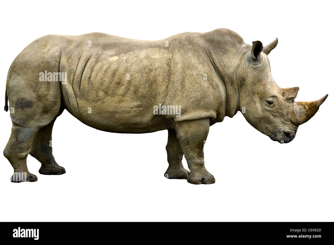 Rhinoceros Rhino cut out. View from the side. Close up (macro) - Stock Image