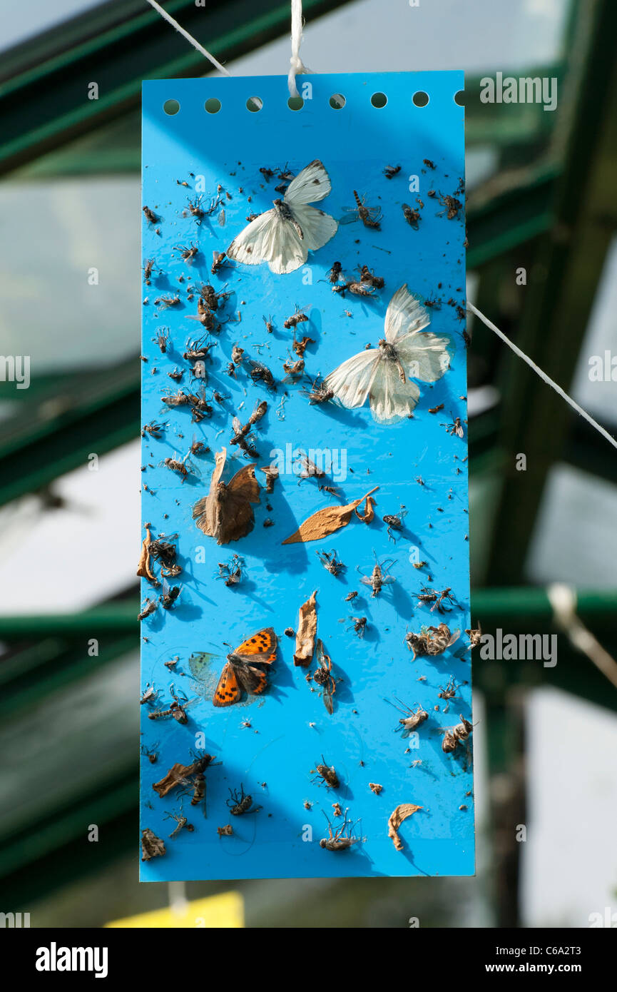 Killing Insects Stock Photos & Killing Insects Stock Images - Alamy