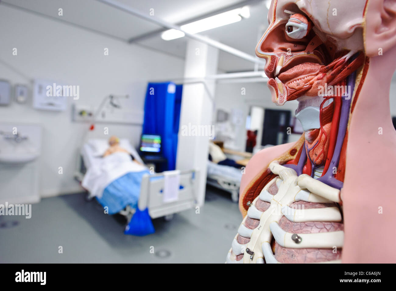 human anatomy anatomical model hospital ward setting clinical skills lab dummy patient in bed - Stock Image