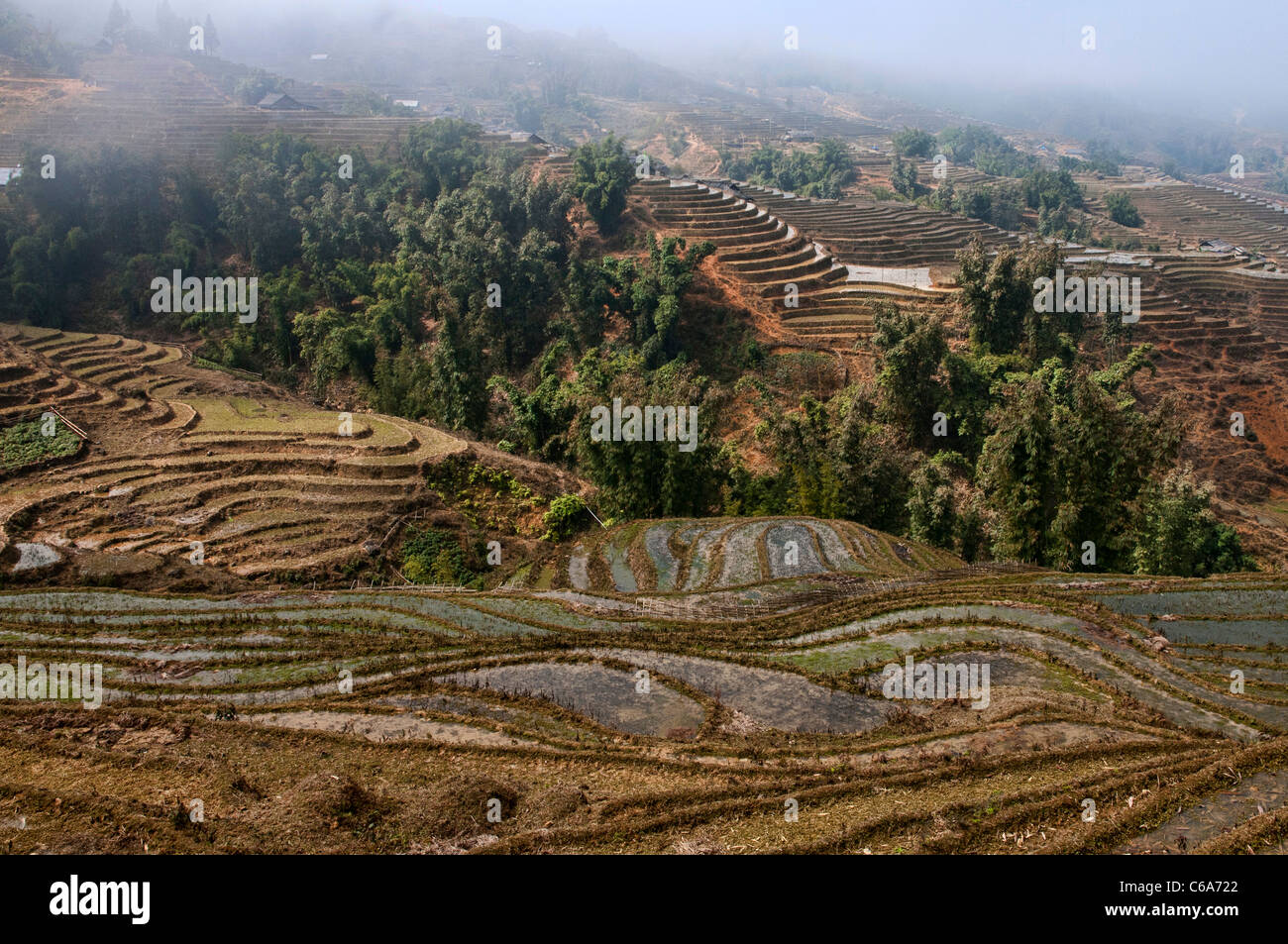 Terrace fields in the North of Vietnam, near Lao Cai - Stock Image