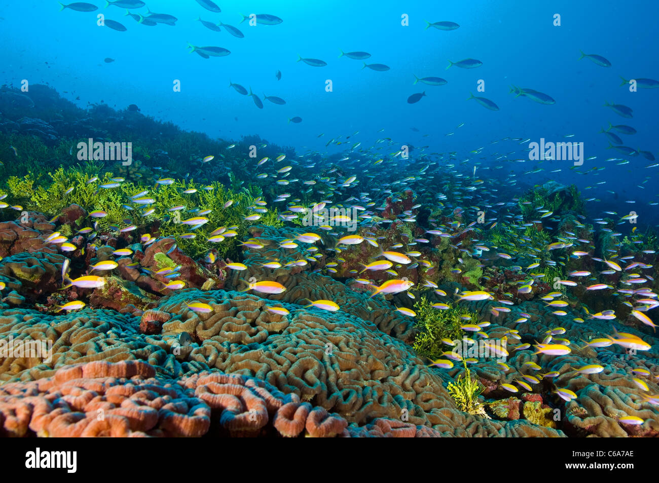 Reef scenic Kribati South East Pacific - Stock Image