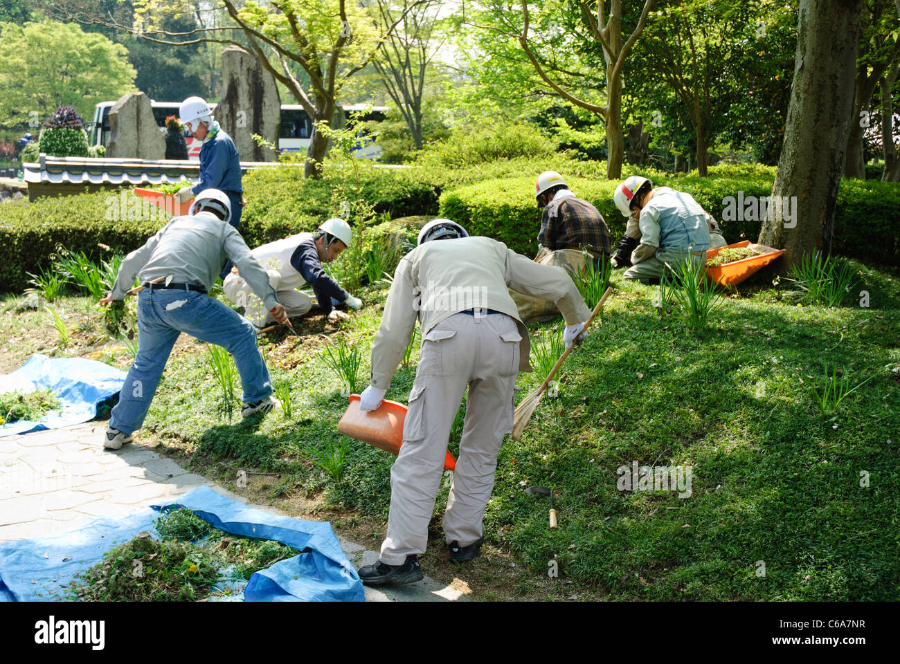 Japanese work team: gardeners at work in Japan. Group of people working together; men; workers demonstrating teamwork. - Stock Image
