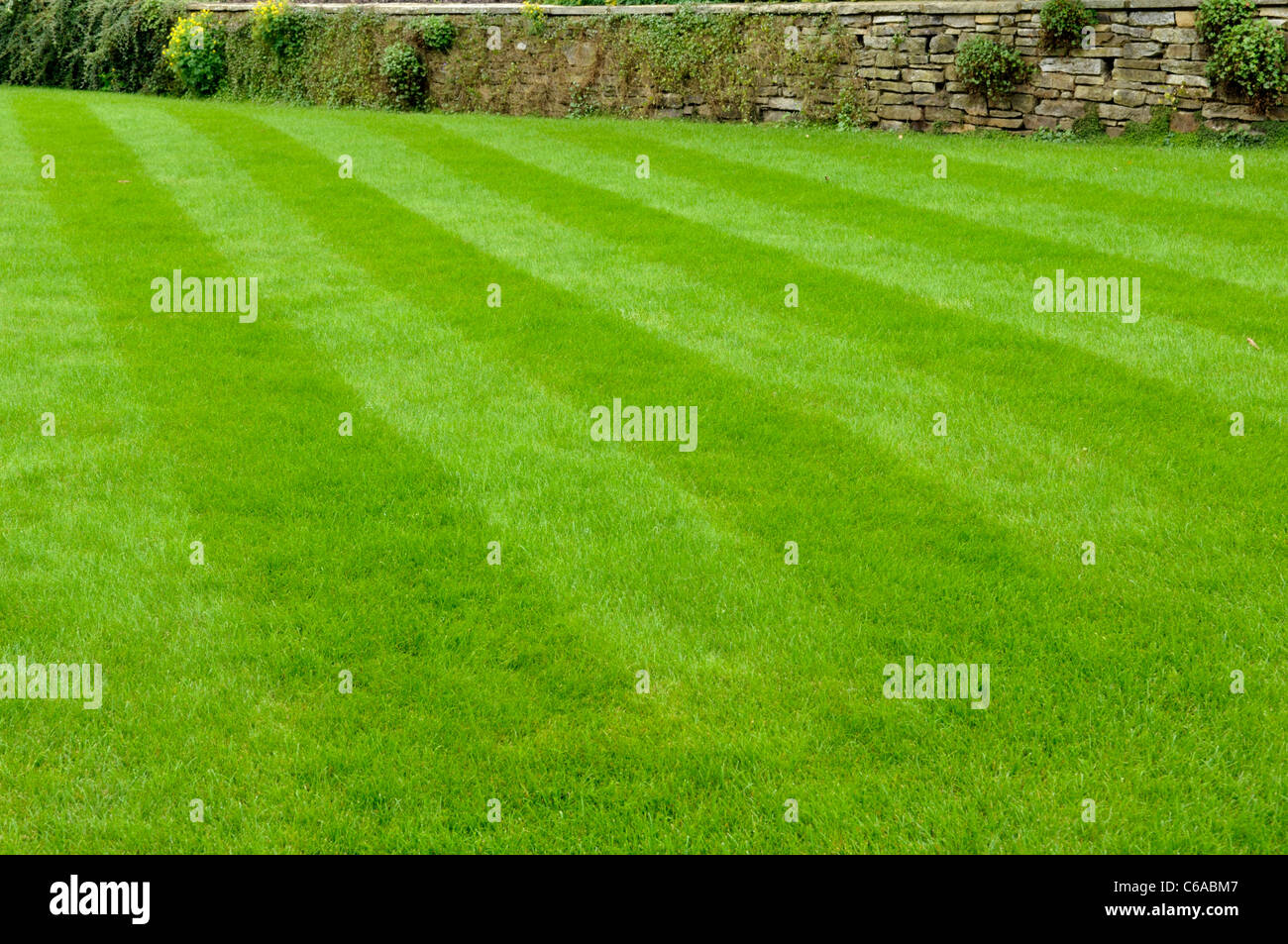 Stripes on lawn after mowing - Stock Image