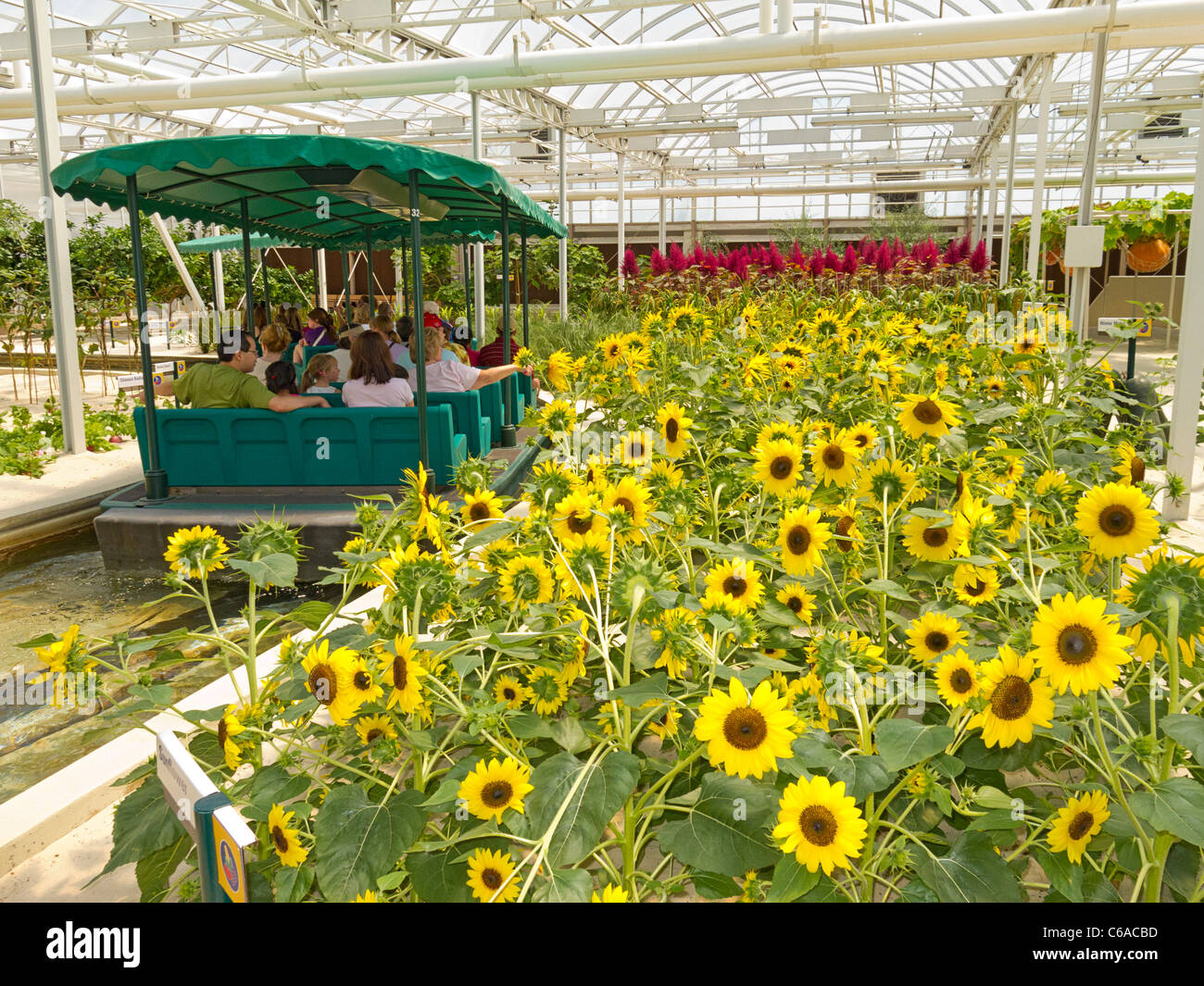 Tourists in a boat go past sunflowers at Disney World's Living With The Land attraction at the Land Pavilion, - Stock Image