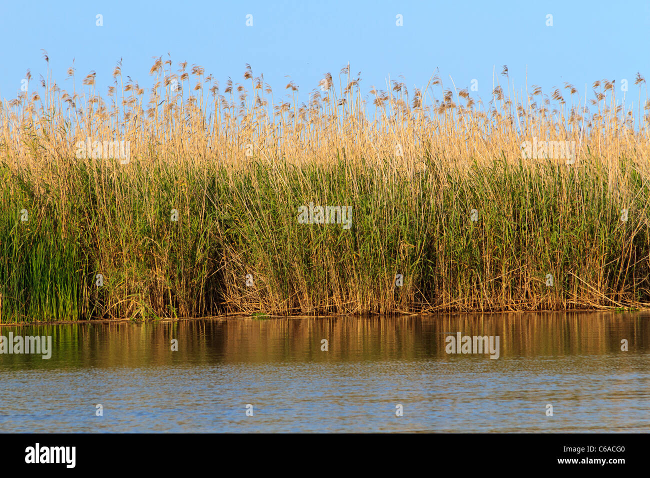 Sea oats and sawgrass along the Apalachicola River in the town of Apalachicola along the Florida Panhandle. - Stock Image
