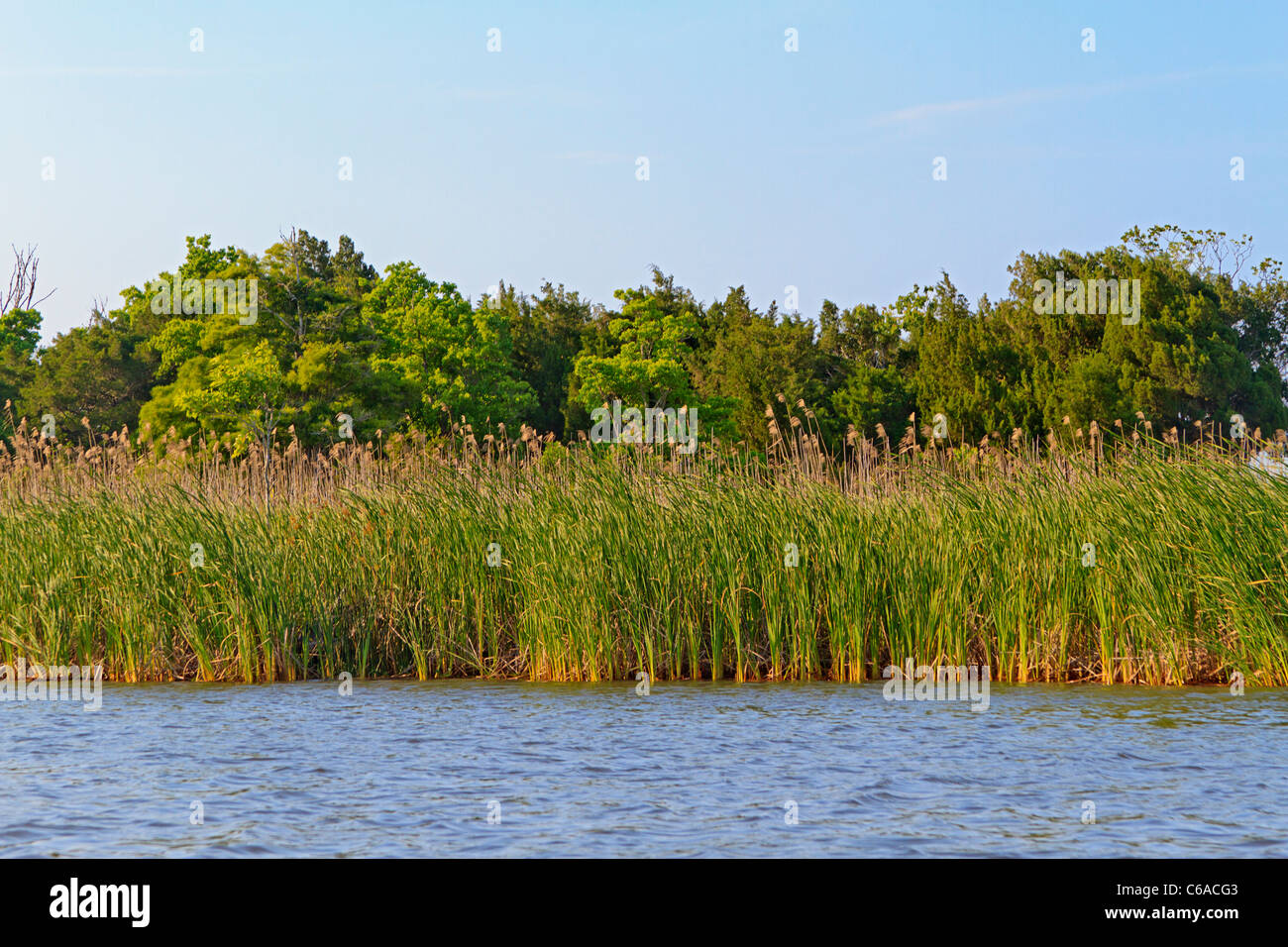 Sea oats and sawgrass with hard wood trees along the Apalachicola River in the town of Apalachicola along the Florida - Stock Image