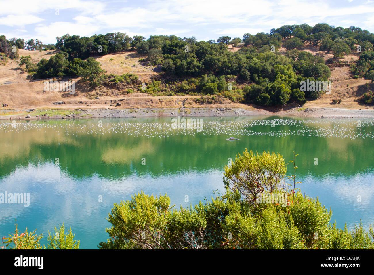 Gulls roosting at Almaden Reservoir in San Jose California Stock Photo