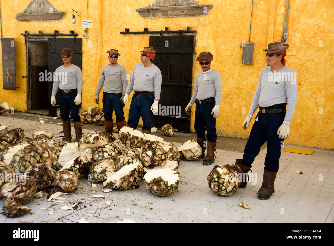 Workers and agave cores for production of tequila at Jose Cuervo Plant in Tequila - Stock Image