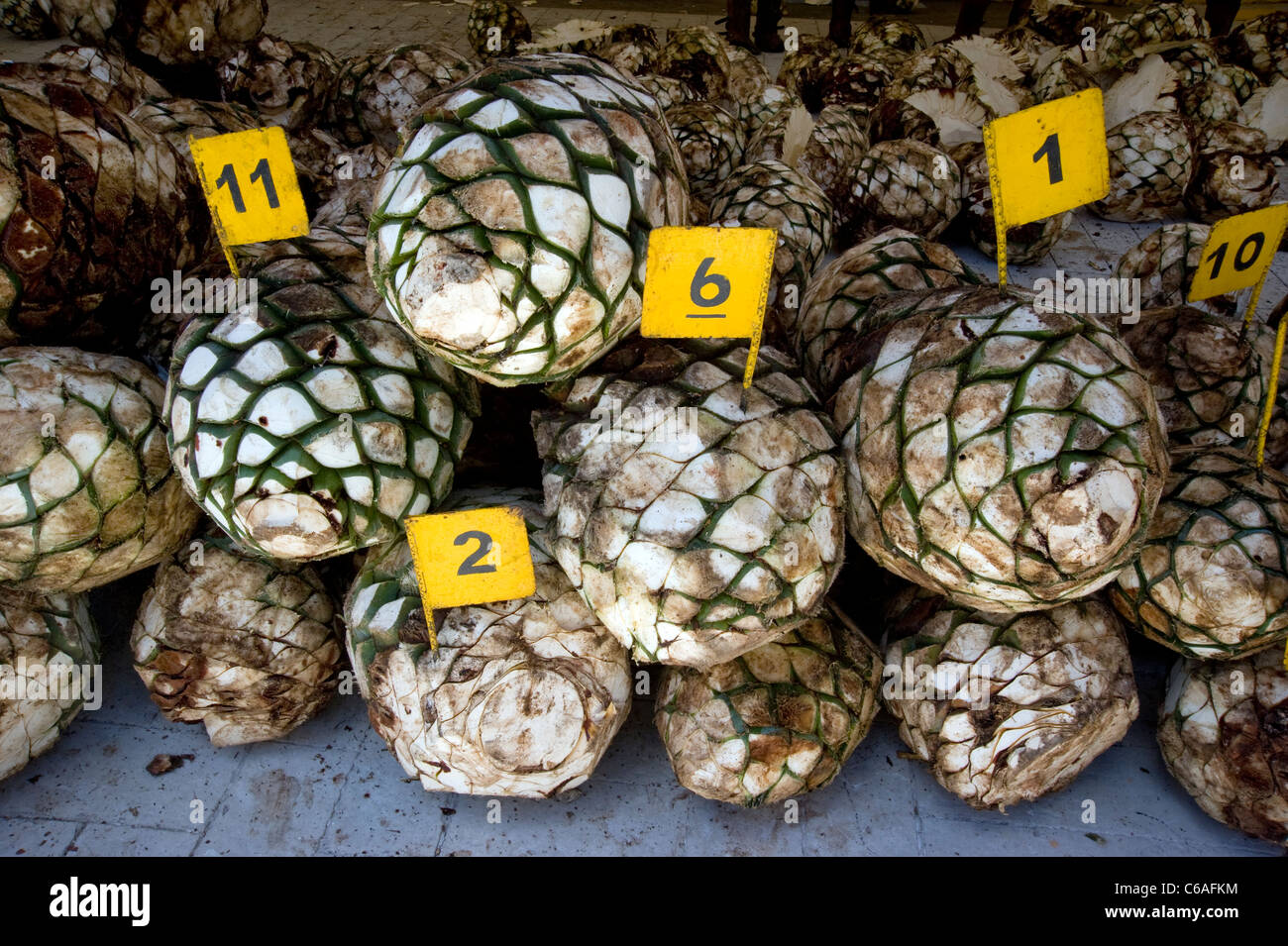 Agave cores for production of tequila at Jose Cuervo Plant in Tequila Stock Photo