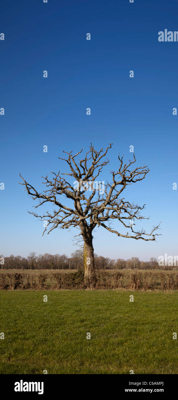 Lone dead tree branches stick field perfect sky lifeless alone silhouette single isolated remote alone - Stock Image