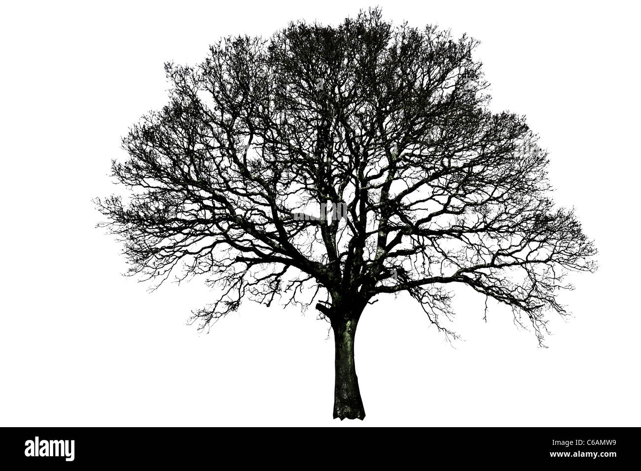 Tree silhouette single black and white line isolated remote alone winter stark solitary