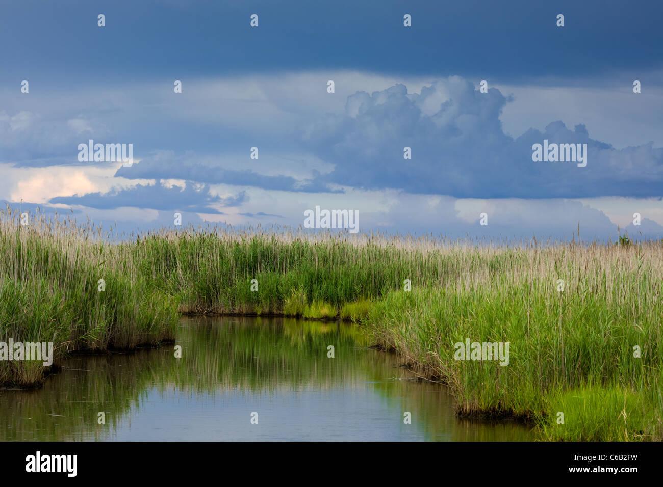 Fecund estuary in Bivalve, New Jersey - Stock Image