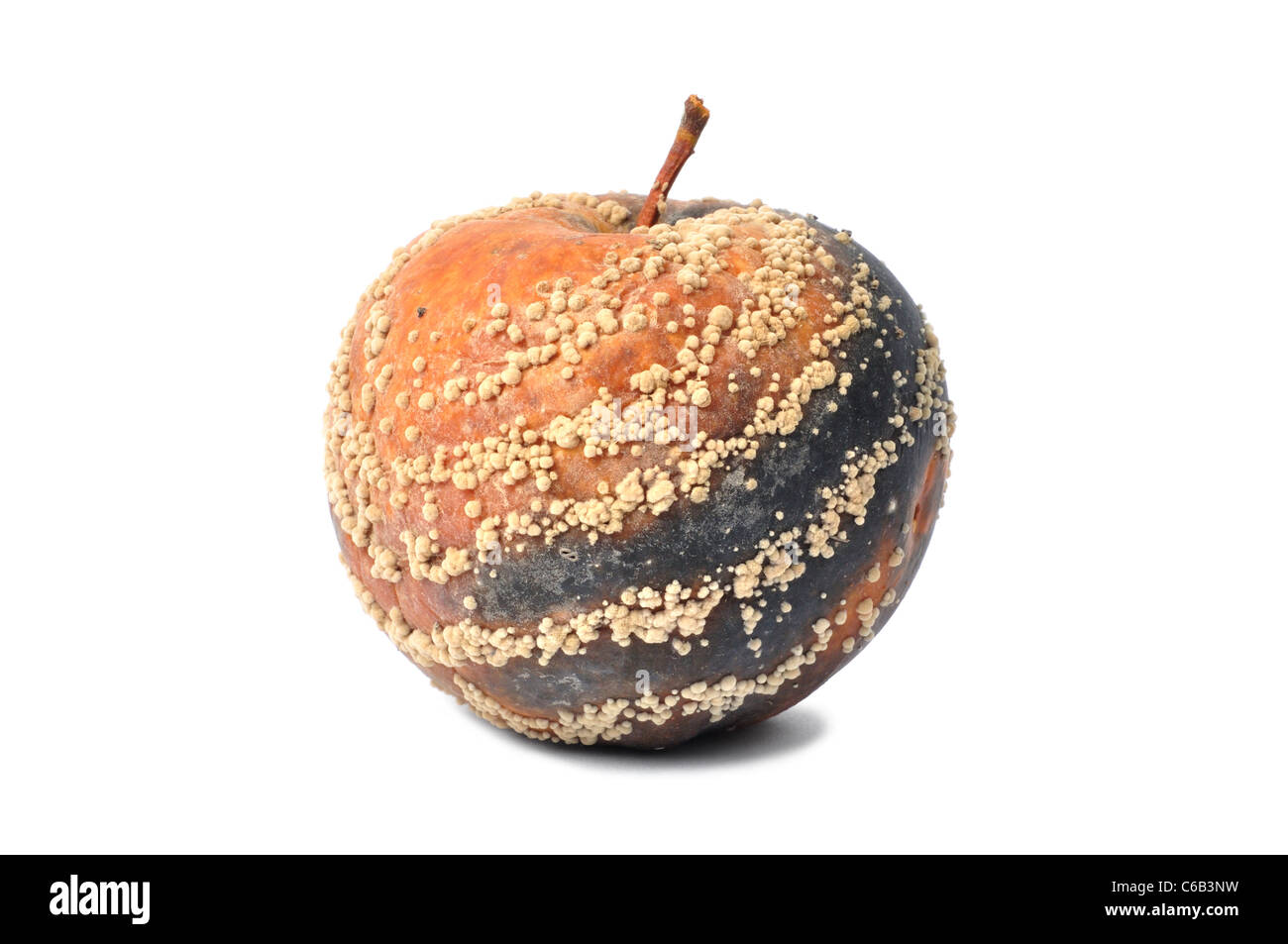 Rotten Apple - Stock Image