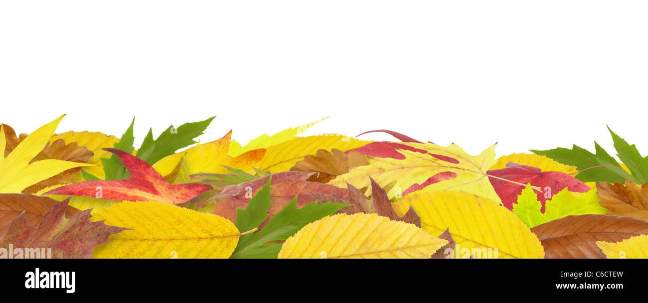 fallen autumn leaves border isolated on white stock photo 38391329
