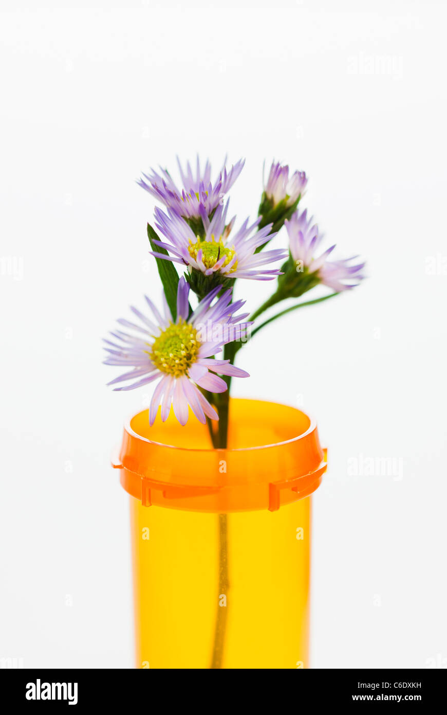 Herbal medicine in pill bottle - Stock Image