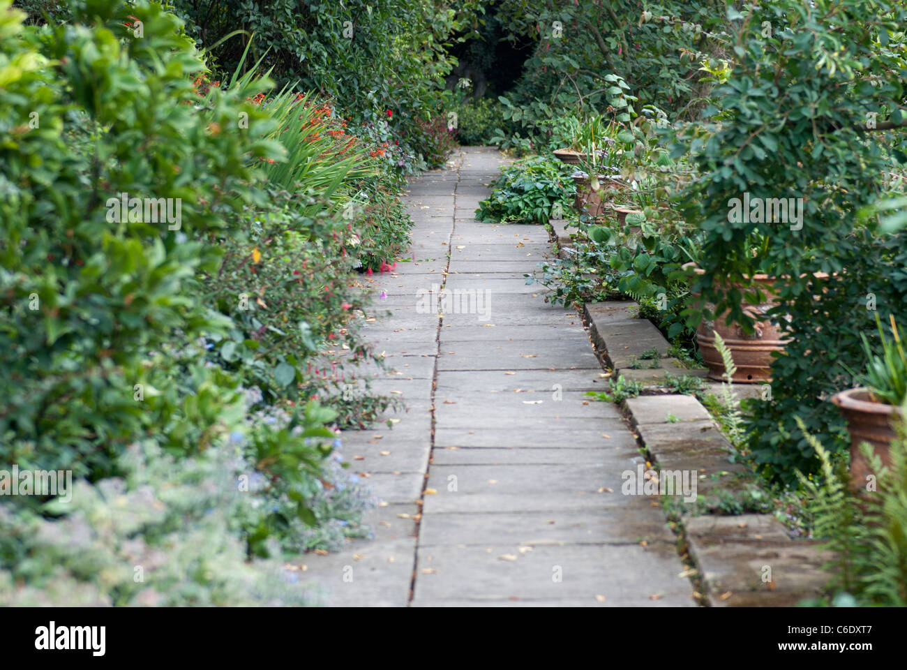 Low View Of An Empty Stone Garden Path With A Variety Of Plants Either Side  Growing