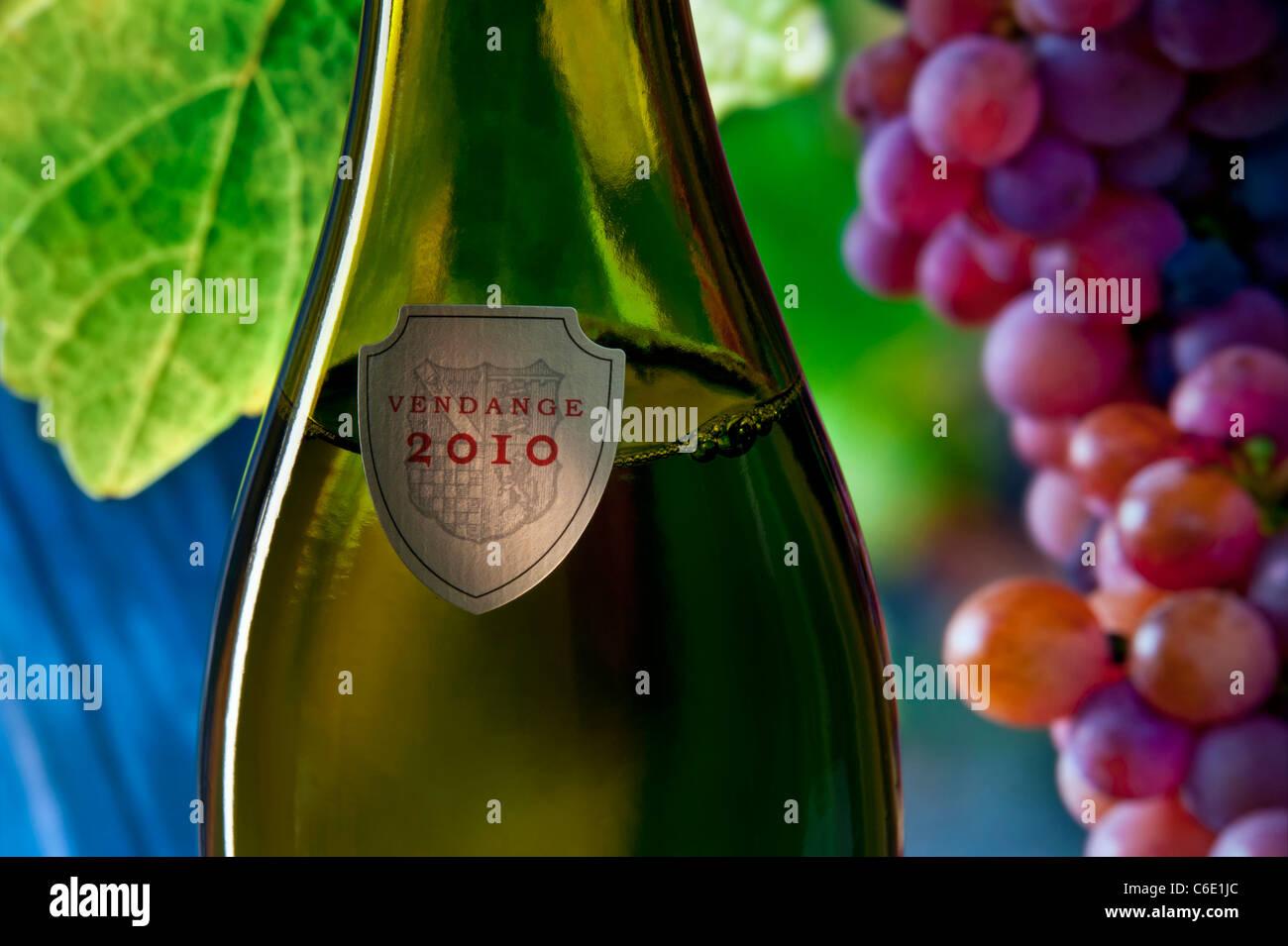 'Vendange 2010' (2010 grape harvest) label on bottle of wine with ripe grapes on vine in background France - Stock Image
