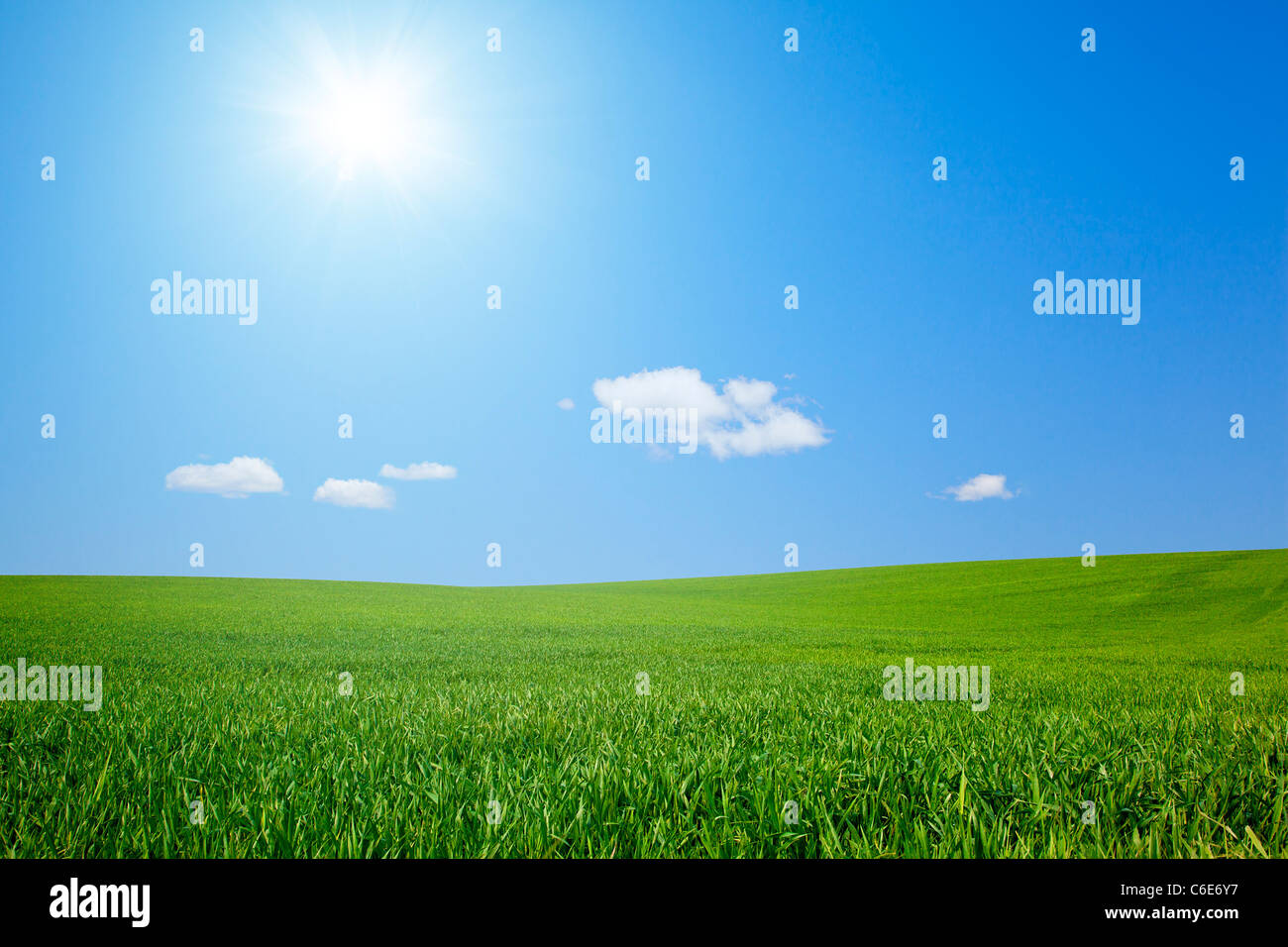 Field with Sun - Stock Image