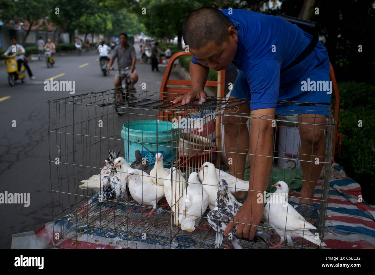 A man sells pigeons as poultry at a market in Congming, Shanghai, China.17-Aug-2011 - Stock Image