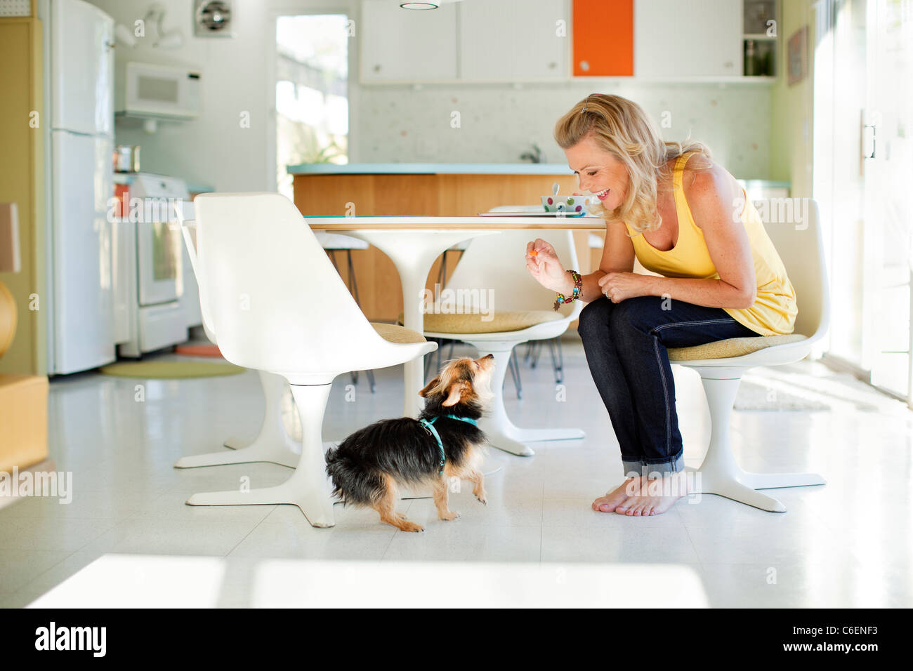 Caucasian woman giving dog treat in dining room Stock Photo