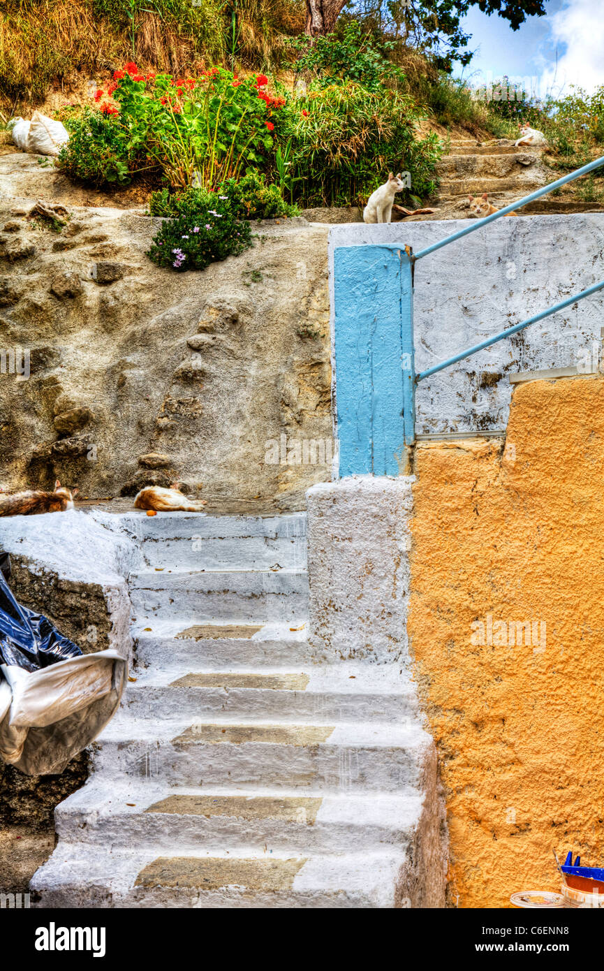 Argostoli capital of kefalonia, Greek Islands, Greece, lots of cats lazing around in the heat of the day on Ionian Stock Photo