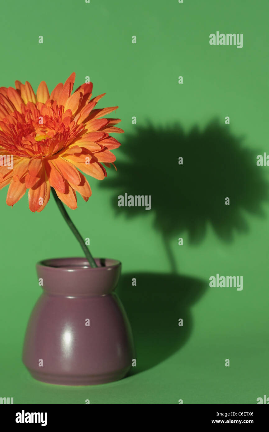 Flower with shadow in vase Stock Photo