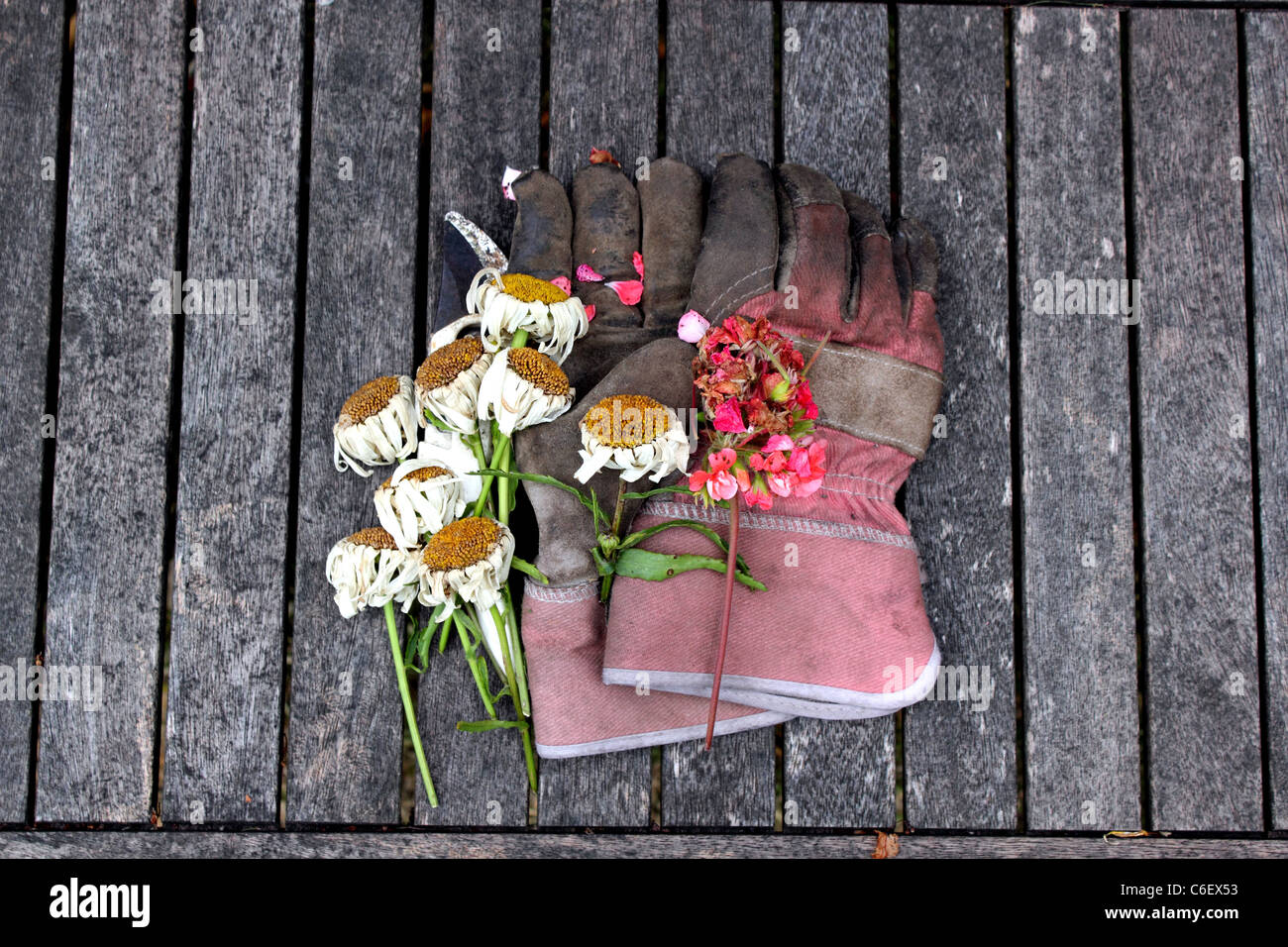 Admirable Overhead View Of Gardening Gloves Secateurs Or Clippers Pdpeps Interior Chair Design Pdpepsorg