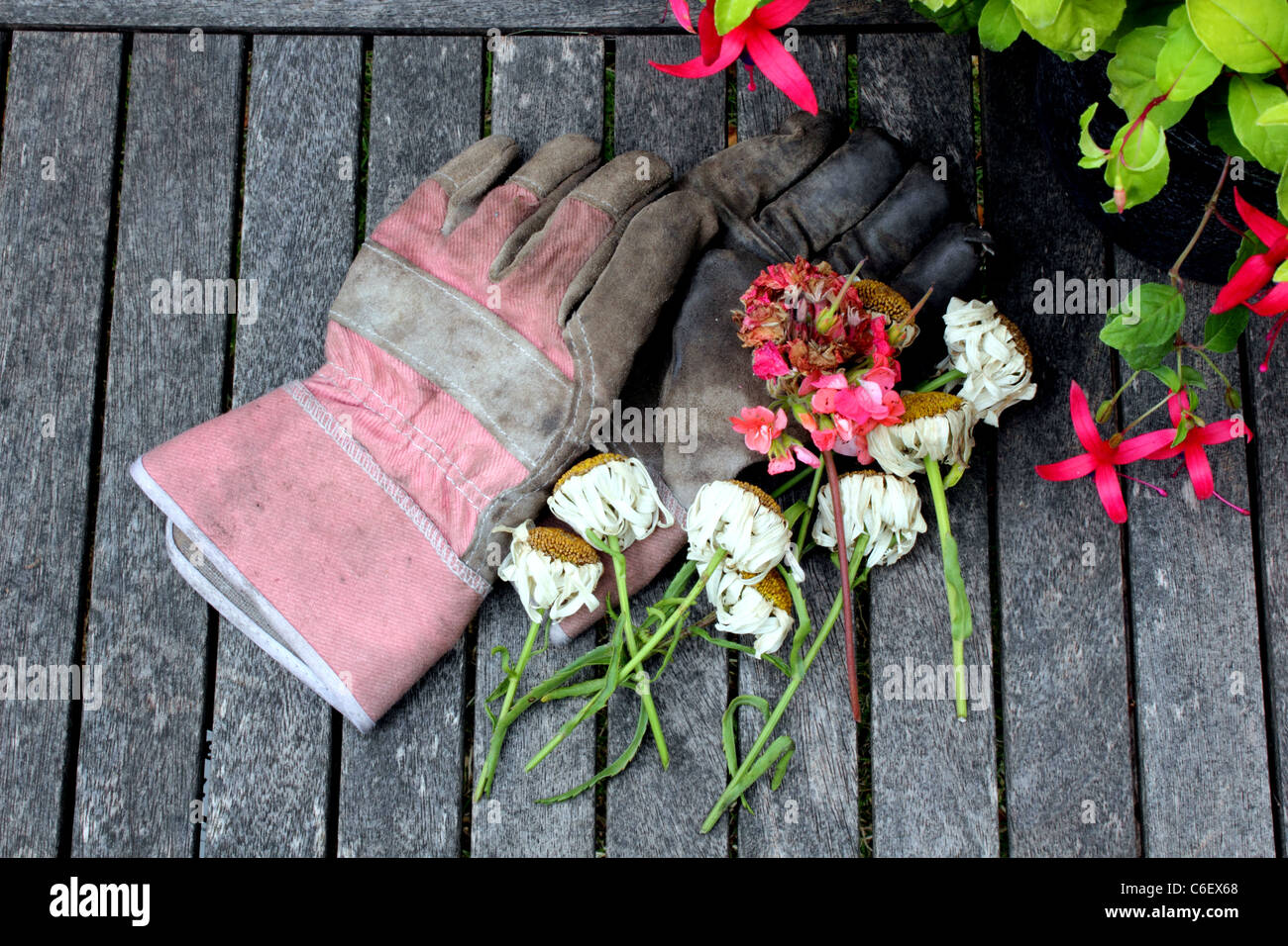 Excellent Overhead View Of Gardening Gloves Secateurs Or Clippers Pdpeps Interior Chair Design Pdpepsorg
