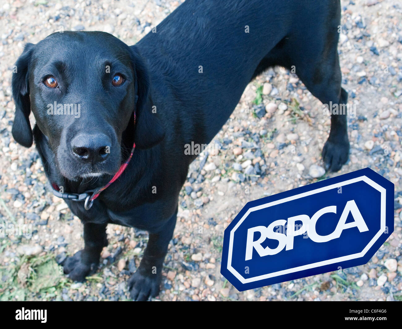 RSPCA logo, dog close up - cut outs placed together., England, UK. View from above top. Close up (macro) - Stock Image