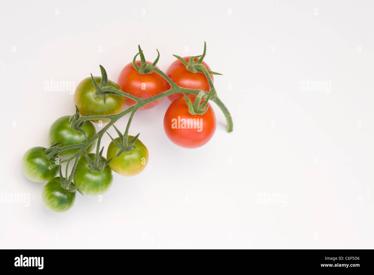 Lycopersicon esculentum. Tomatoes on a vine on a white background. Stock Photo