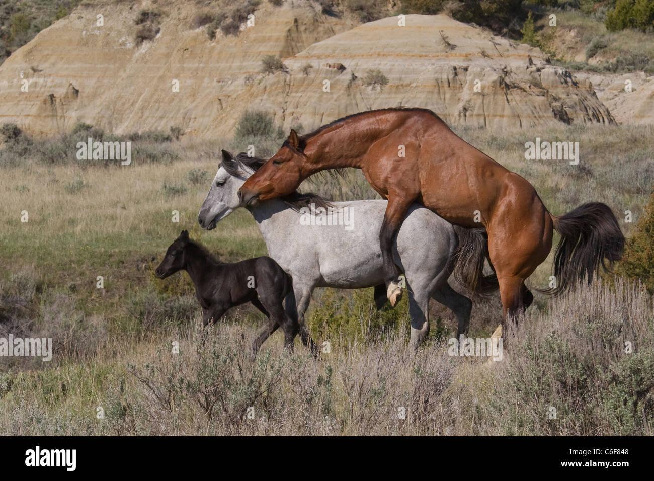 Horse mating ashlynn brooke