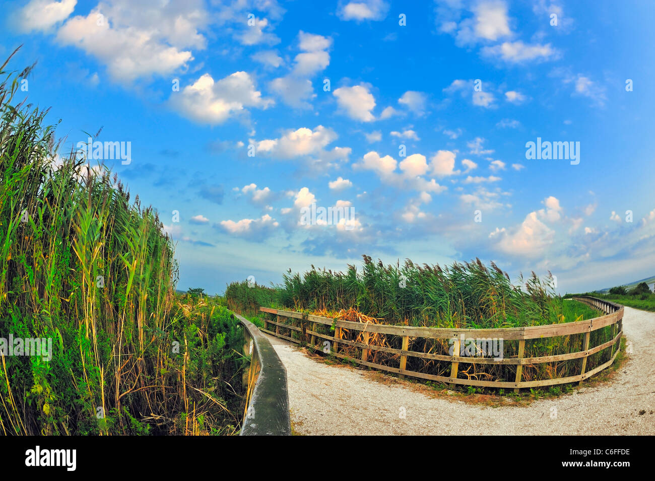 Marshland, tall reeds blowing in wind, with pebble path and curved wood fences around marsh grass, clouds, Levy - Stock Image