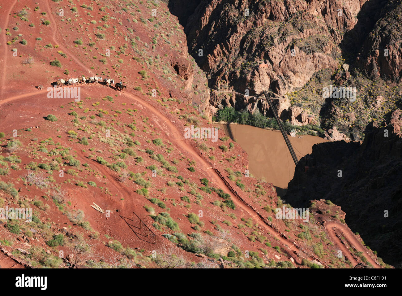 a Grand Canyon mule train on the lower South Kaibab Trail Stock Photo