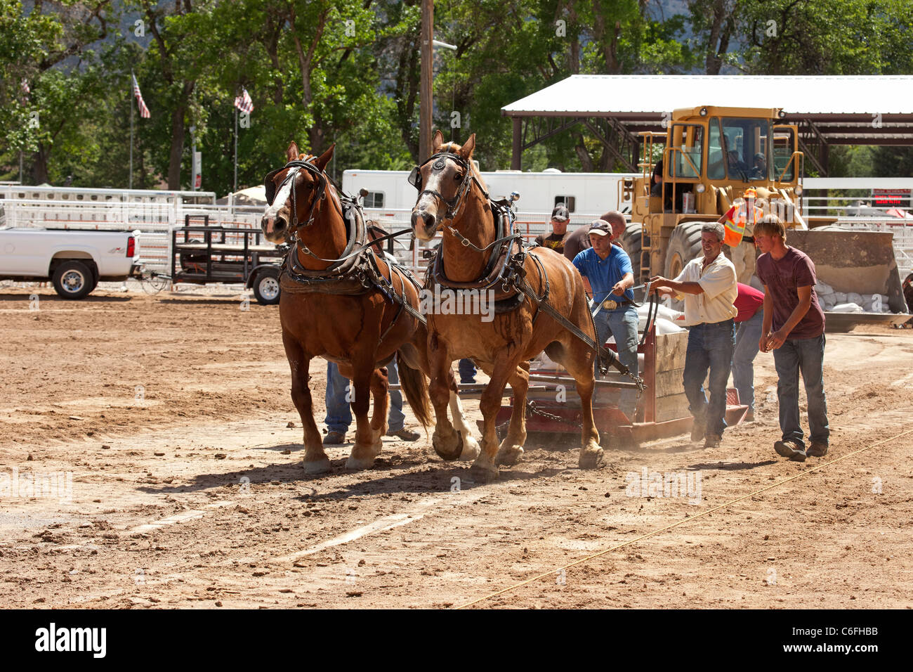 Draft Horse Teamster Pulling Competition At Local County Fair With Stock Photo Alamy