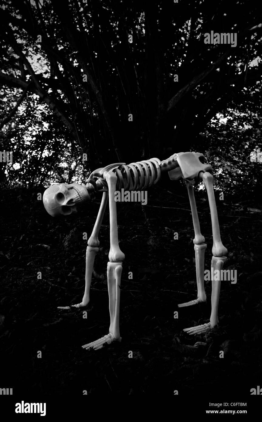 Hybrid human skeleton - Stock Image